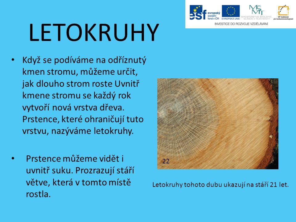 LETOKRUHY Když se podíváme na odříznutý kmen stromu, můžeme určit, jak dlouho strom roste Uvnitř kmene stromu se každý rok vytvoří nová vrstva dřeva.