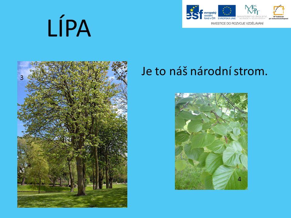 LÍPA Je to náš národní strom. 3 4