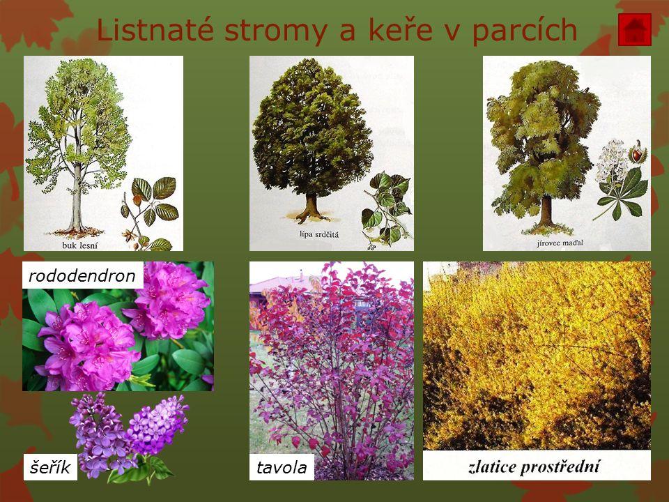 Listnaté stromy a keře v parcích tavolašeřík rododendron
