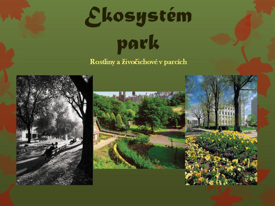 Ekosystém park Rostliny a ž ivo č ichové v parcích