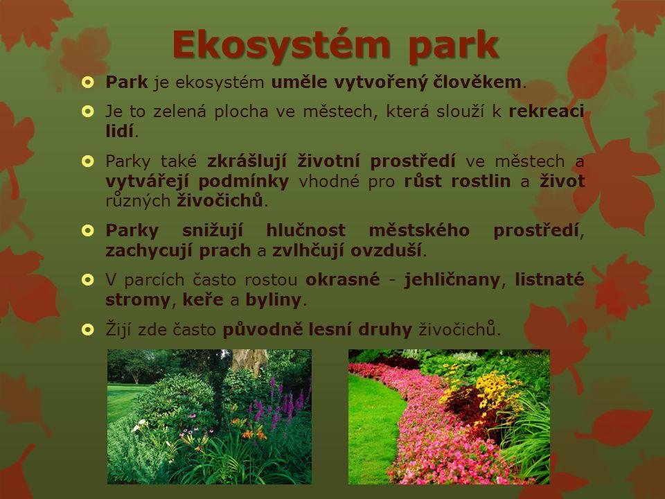 Ekosystém park  Park je ekosystém uměle vytvořený člověkem.
