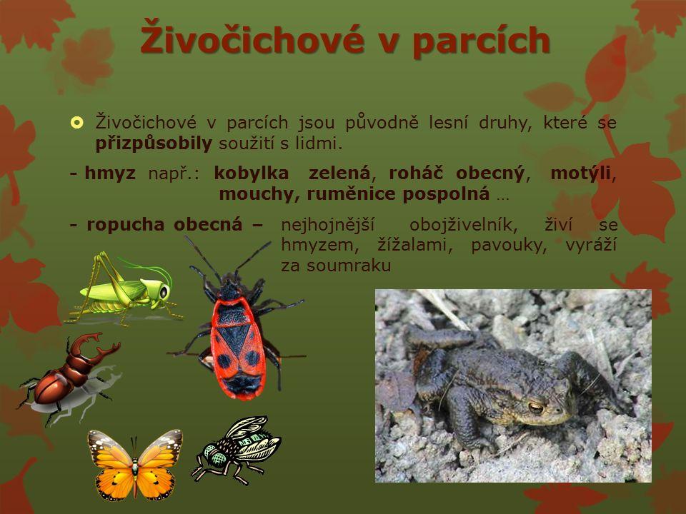 Živočichové v parcích  Živočichové v parcích jsou původně lesní druhy, které se přizpůsobily soužití s lidmi.