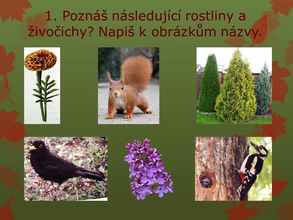 strakapoud šeřík kos túje veverkaafrikán 1. Poznáš následující rostliny a živočichy.