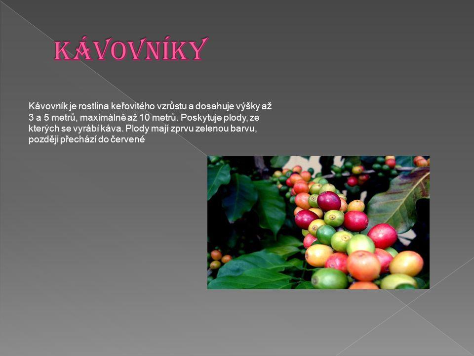 Kávovník je rostlina keřovitého vzrůstu a dosahuje výšky až 3 a 5 metrů, maximálně až 10 metrů. Poskytuje plody, ze kterých se vyrábí káva. Plody mají