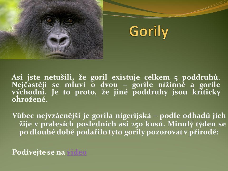 Asi jste netušili, že goril existuje celkem 5 poddruhů.
