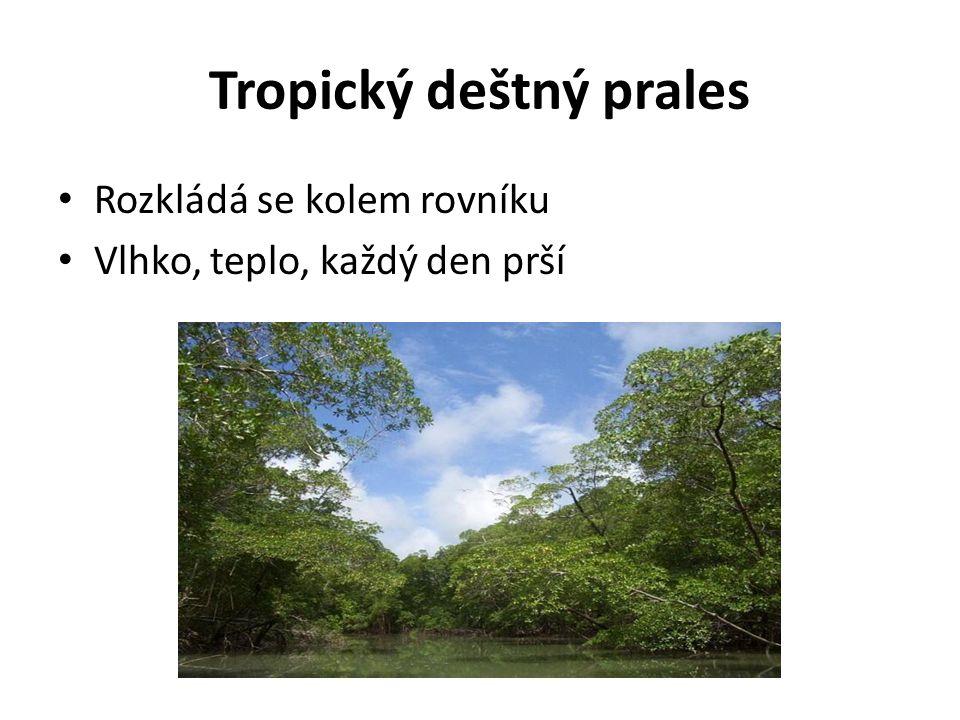 Tropický deštný prales Rozkládá se kolem rovníku Vlhko, teplo, každý den prší