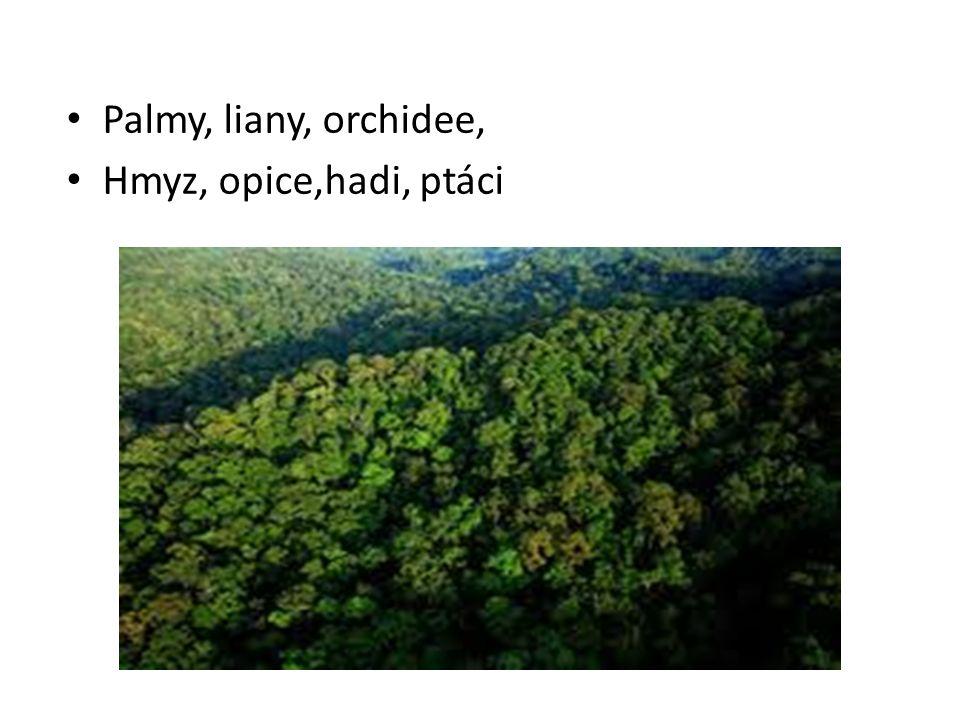 Palmy, liany, orchidee, Hmyz, opice,hadi, ptáci