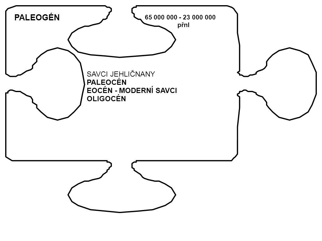 PALEOGÉN 65 000 000 - 23 000 000 přnl SAVCI JEHLIČNANY PALEOCÉN EOCÉN - MODERNÍ SAVCI OLIGOCÉN