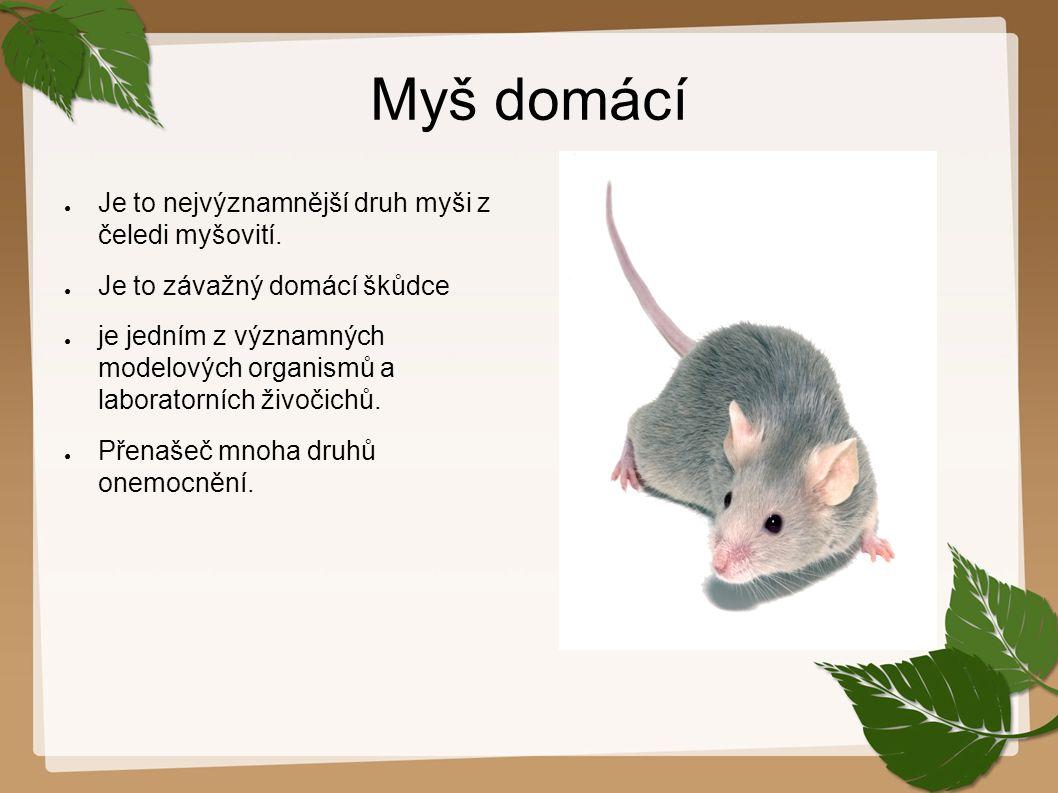 Myš domácí ● Je to nejvýznamnější druh myši z čeledi myšovití. ● Je to závažný domácí škůdce ● je jedním z významných modelových organismů a laborator