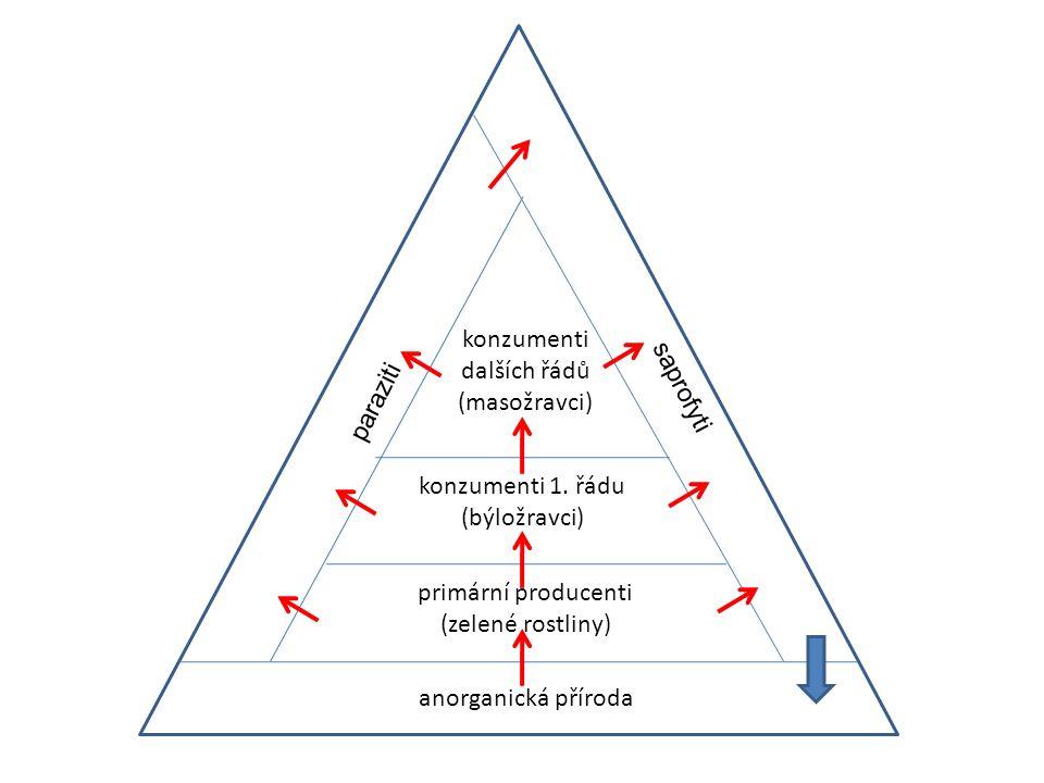 Potravní řetězec = soubor organismů na sobě troficky závislých typy potravních řetězců : 1)pastevně kořistnický rostlina  býložravec  drobný masožravec  velký masožravec v přírodě nebývá řetězec přímý, ale různě modifikovaný a větvený velikost těla konzumentů se postupně zvětšuje počet klesá
