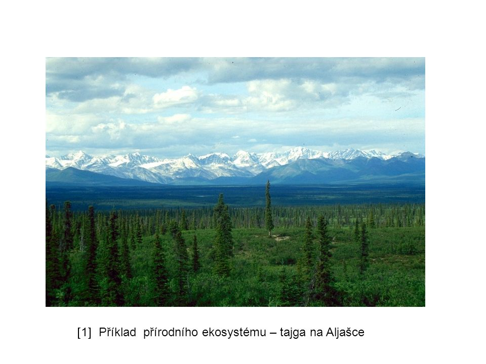 Rozdělení ekosystémů podle zásahů člověka 2) umělé ekosystémy vznikají zásahem člověka v současnosti převažují malý počet druhů, někdy jde i o monokulturu (obilné pole, smrkový les) výsledkem je nestabilita snadné narušení - vývraty, přemnožení škůdců (chybí predátoři) např.