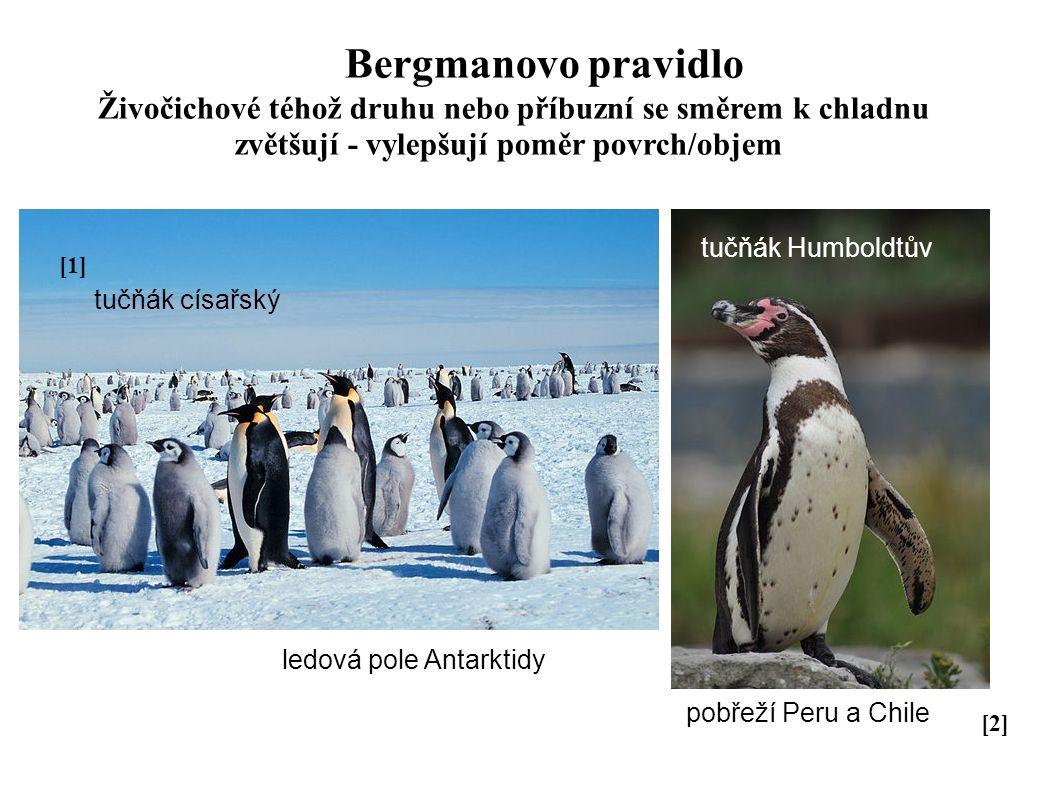 Bergmanovo pravidlo Živočichové téhož druhu nebo příbuzní se směrem k chladnu zvětšují - vylepšují poměr povrch/objem tučňák Humboldtův ledová pole An