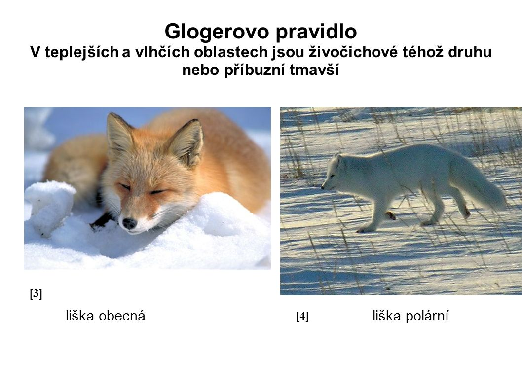 Glogerovo pravidlo V teplejších a vlhčích oblastech jsou živočichové téhož druhu nebo příbuzní tmavší liška obecná liška polární [3][3] liška obecná [4][4]