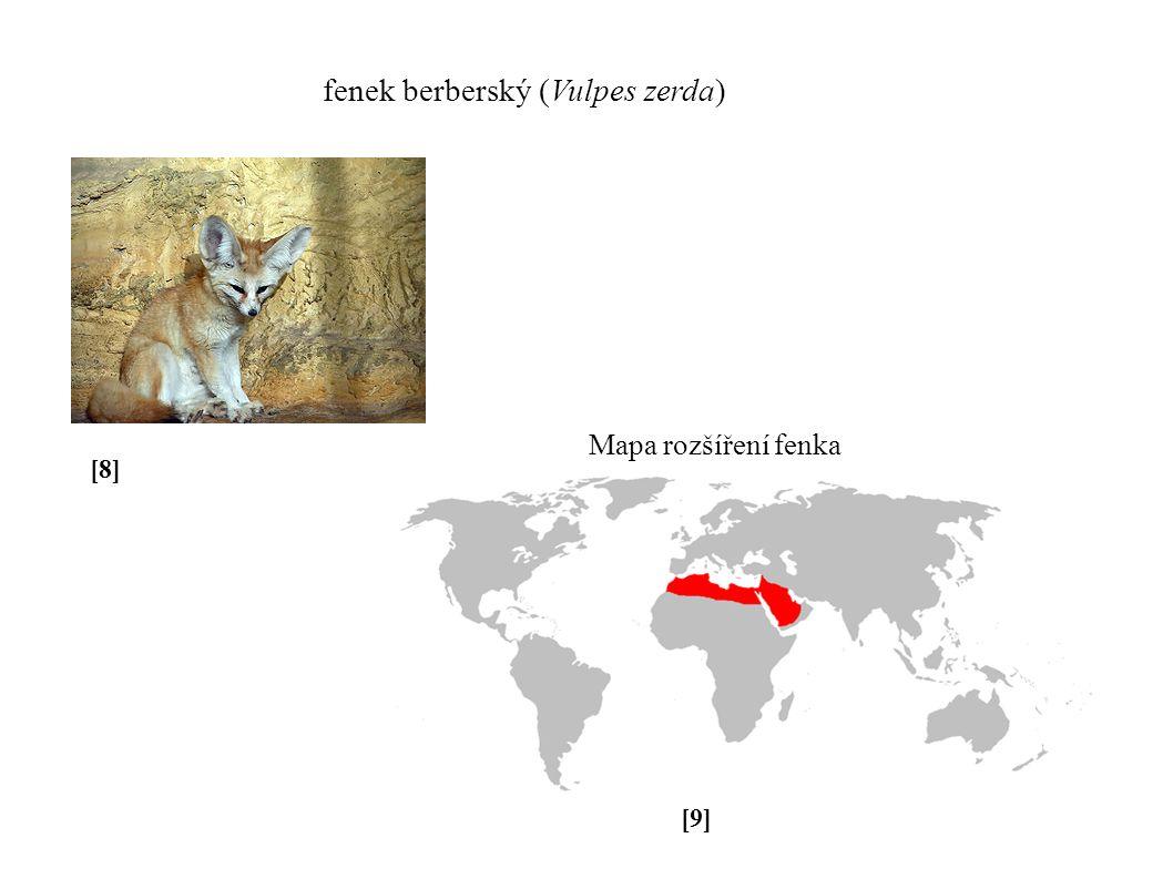 + podpravidlo srsti [8][8] [9][9] fenek berberský (Vulpes zerda) Mapa rozšíření fenka