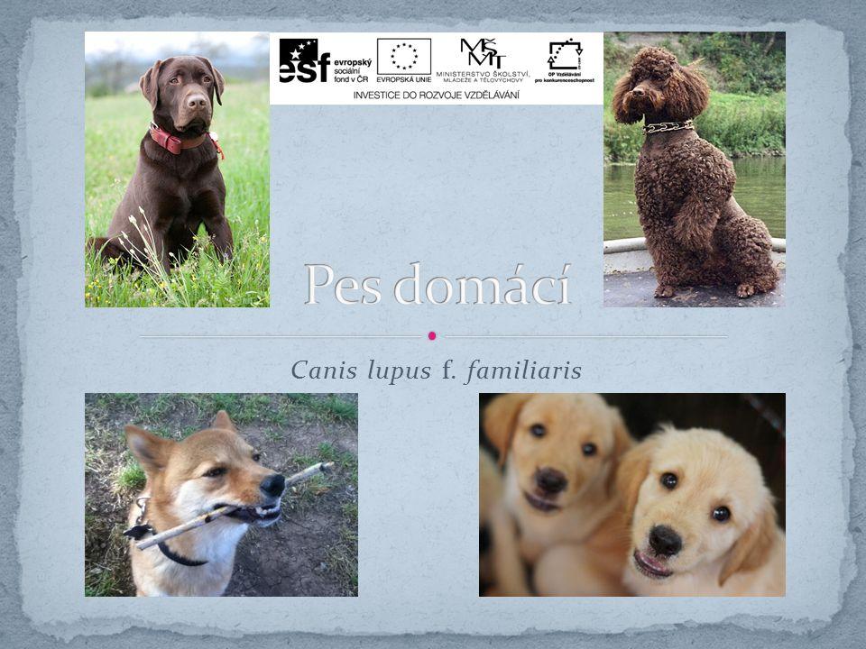 Doplň.1. Pes se vyvinul z _______ obecného. 2. Doplň dva druhy využití psa domácího.