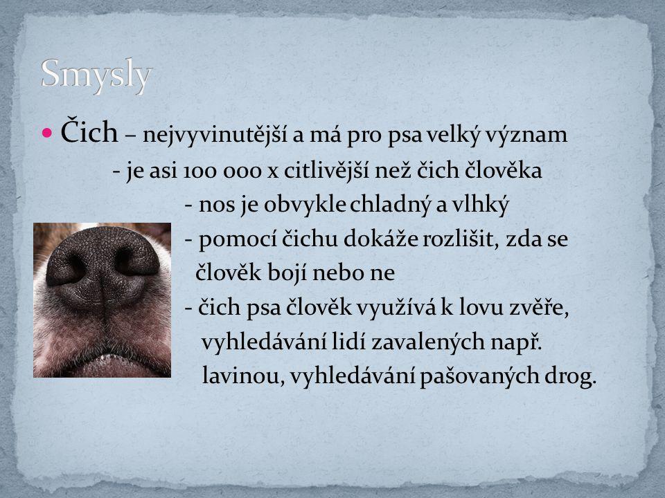 Zrak - oči psa jsou plošší než lidské, pes hůře zaostřuje - psi jsou dalekozrací – hůře vidí na krátkou vzdálenost - dobře vidí i za šera a dobře vnímá i pohyb - psi jsou barvoslepí – tzn.