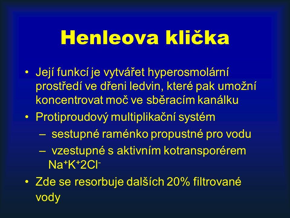 Henleova klička Její funkcí je vytvářet hyperosmolární prostředí ve dřeni ledvin, které pak umožní koncentrovat moč ve sběracím kanálku Protiproudový multiplikační systém – sestupné raménko propustné pro vodu – vzestupné s aktivním kotransporérem Na + K + 2Cl - Zde se resorbuje dalších 20% filtrované vody