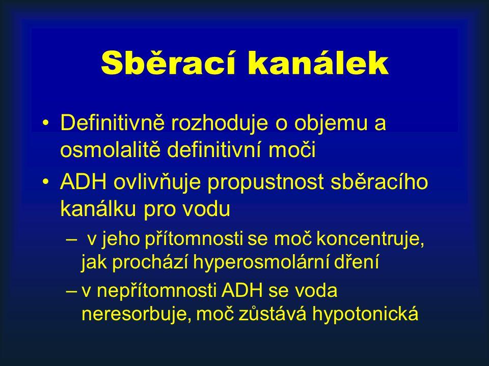 Sběrací kanálek Definitivně rozhoduje o objemu a osmolalitě definitivní moči ADH ovlivňuje propustnost sběracího kanálku pro vodu – v jeho přítomnosti se moč koncentruje, jak prochází hyperosmolární dření –v nepřítomnosti ADH se voda neresorbuje, moč zůstává hypotonická