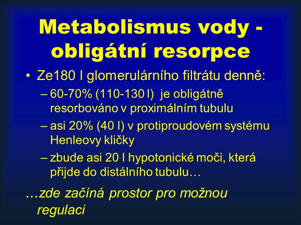 Metabolismus vody - obligátní resorpce Ze180 l glomerulárního filtrátu denně: –60-70% (110-130 l) je obligátně resorbováno v proximálním tubulu –asi 20% (40 l) v protiproudovém systému Henleovy kličky –zbude asi 20 l hypotonické moči, která přijde do distálního tubulu…...