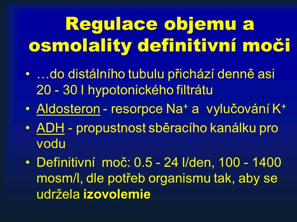 Regulace objemu a osmolality definitivní moči …do distálního tubulu přichází denně asi 20 - 30 l hypotonického filtrátu Aldosteron - resorpce Na + a vylučování K + ADH - propustnost sběracího kanálku pro vodu izovolemieDefinitivní moč: 0.5 - 24 l/den, 100 - 1400 mosm/l, dle potřeb organismu tak, aby se udržela izovolemie