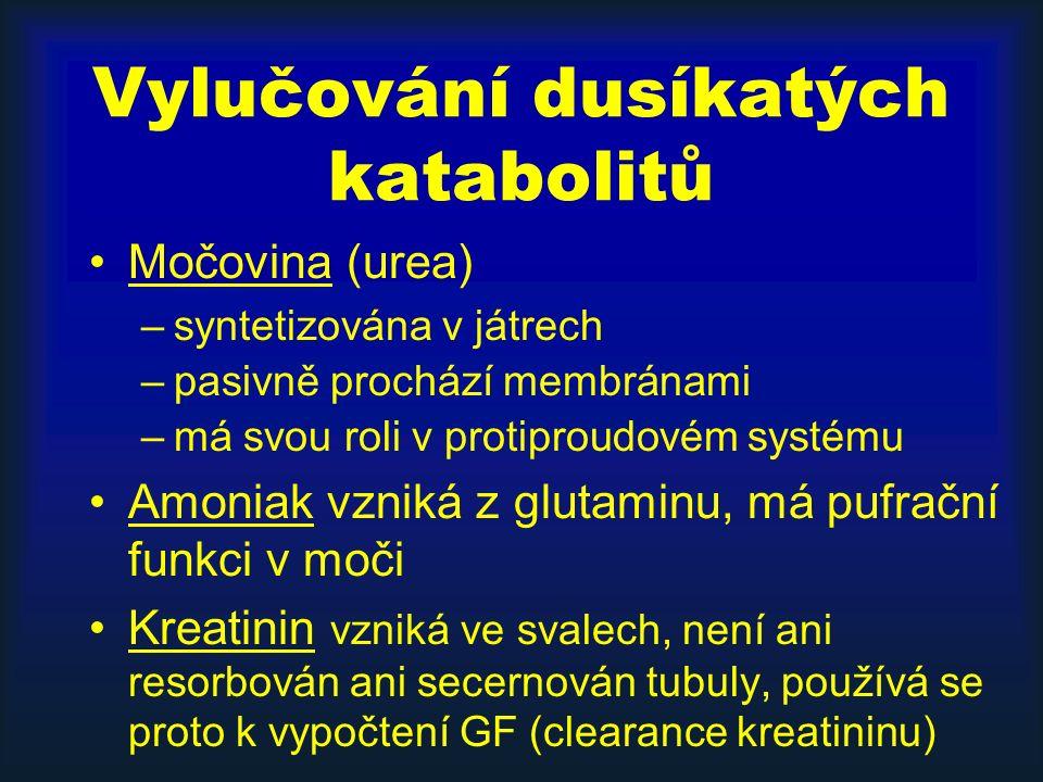 Vylučování dusíkatých katabolitů Močovina (urea) –syntetizována v játrech –pasivně prochází membránami –má svou roli v protiproudovém systému Amoniak vzniká z glutaminu, má pufrační funkci v moči Kreatinin vzniká ve svalech, není ani resorbován ani secernován tubuly, používá se proto k vypočtení GF (clearance kreatininu)