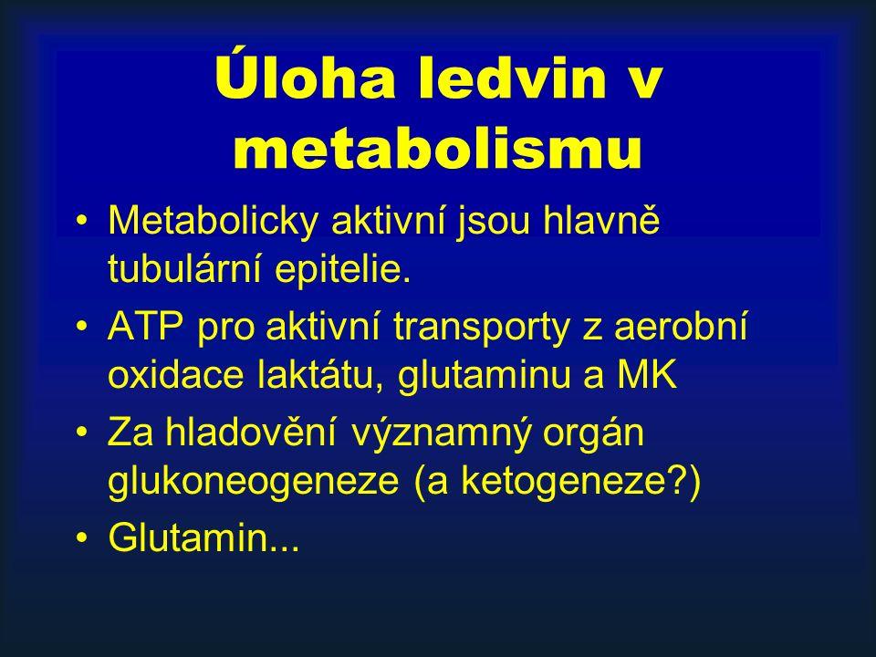 Úloha ledvin v metabolismu Metabolicky aktivní jsou hlavně tubulární epitelie.