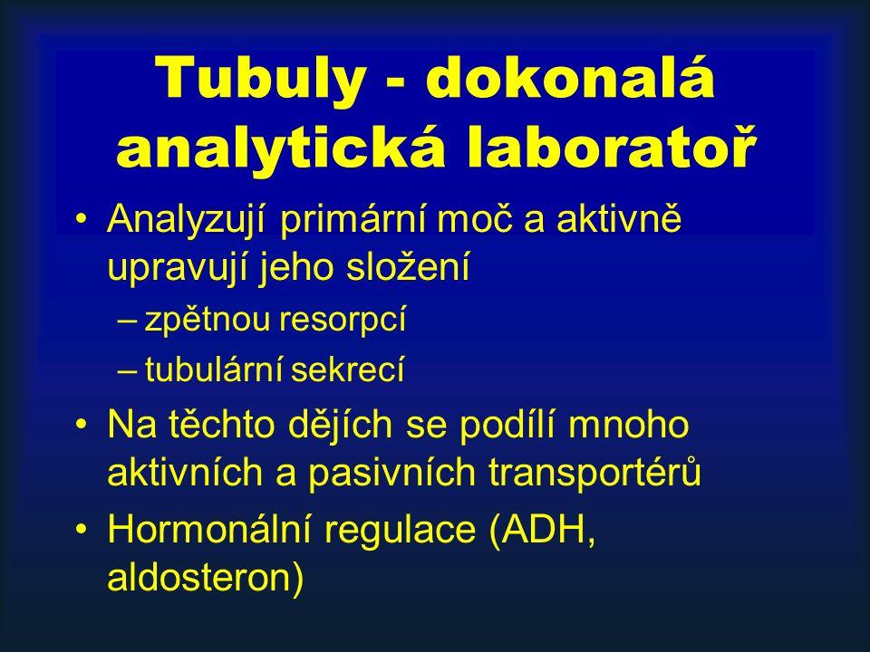 Tubuly - dokonalá analytická laboratoř Analyzují primární moč a aktivně upravují jeho složení –zpětnou resorpcí –tubulární sekrecí Na těchto dějích se podílí mnoho aktivních a pasivních transportérů Hormonální regulace (ADH, aldosteron)