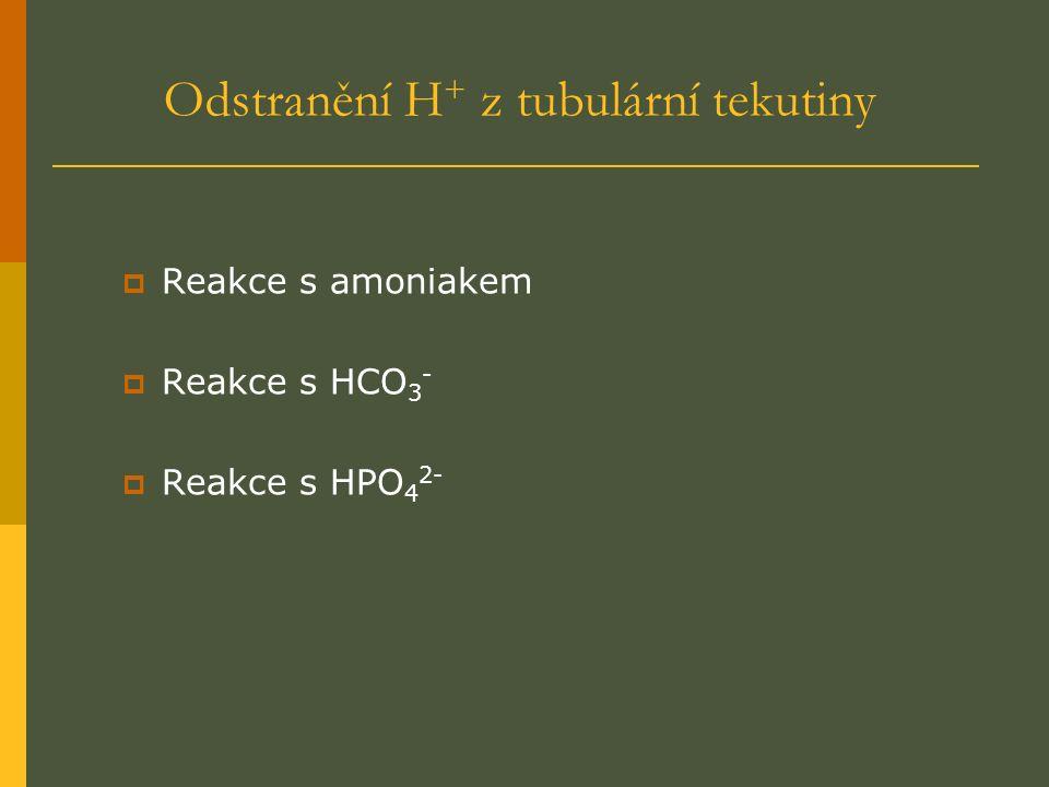 Odstranění H + z tubulární tekutiny  Reakce s amoniakem  Reakce s HCO 3 -  Reakce s HPO 4 2-