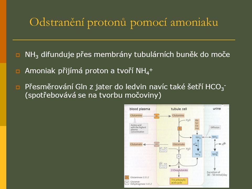 Odstranění protonů pomocí amoniaku  NH 3 difunduje přes membrány tubulárních buněk do moče  Amoniak přijímá proton a tvoří NH 4 +  Přesměrování Gln z jater do ledvin navíc také šetří HCO 3 - (spotřebovává se na tvorbu močoviny)