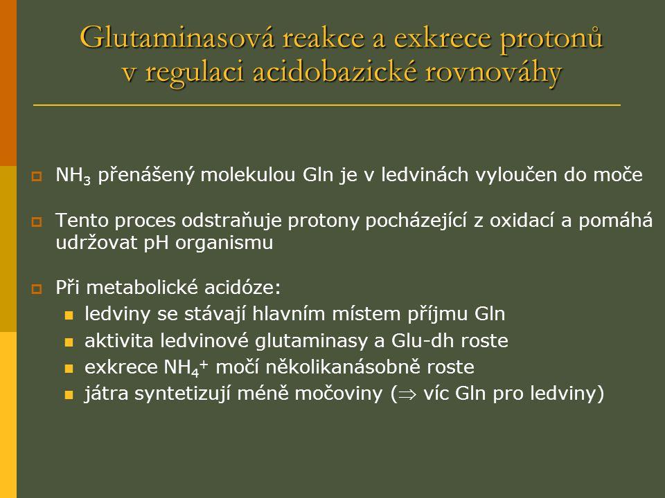 Glutaminasová reakce a exkrece protonů v regulaci acidobazické rovnováhy  NH 3 přenášený molekulou Gln je v ledvinách vyloučen do moče  Tento proces odstraňuje protony pocházející z oxidací a pomáhá udržovat pH organismu  Při metabolické acidóze: ledviny se stávají hlavním místem příjmu Gln aktivita ledvinové glutaminasy a Glu-dh roste exkrece NH 4 + močí několikanásobně roste játra syntetizují méně močoviny ( víc Gln pro ledviny)