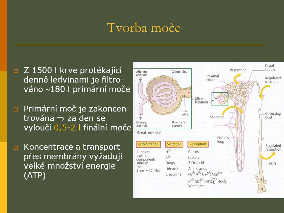 Tvorba moče  Z 1500 l krve protékající denně ledvinami je filtro- váno 180 l primární moče  Primární moč je zakoncen- trována  za den se vyloučí 0,5-2 l finální moče  Koncentrace a transport přes membrány vyžadují velké množství energie (ATP)