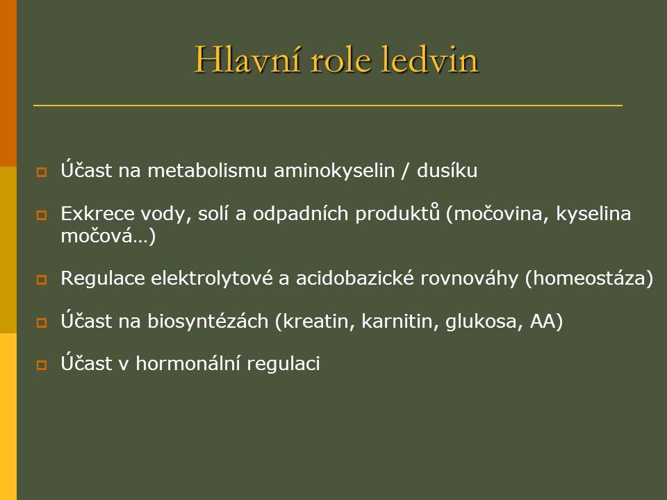 Hlavní role ledvin  Účast na metabolismu aminokyselin / dusíku  Exkrece vody, solí a odpadních produktů (močovina, kyselina močová…)  Regulace elektrolytové a acidobazické rovnováhy (homeostáza)  Účast na biosyntézách (kreatin, karnitin, glukosa, AA)  Účast v hormonální regulaci