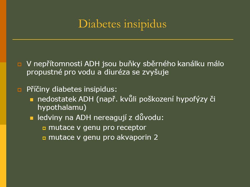 Diabetes insipidus  V nepřítomnosti ADH jsou buňky sběrného kanálku málo propustné pro vodu a diuréza se zvyšuje  Příčiny diabetes insipidus: nedostatek ADH (např.