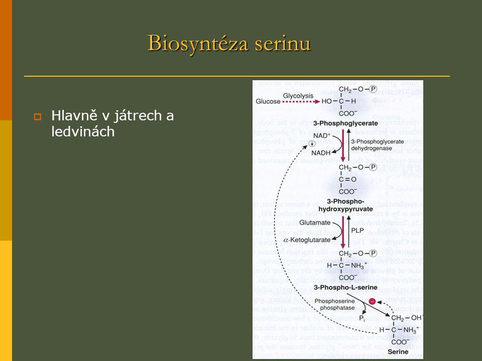 Biosyntéza serinu  Hlavně v játrech a ledvinách