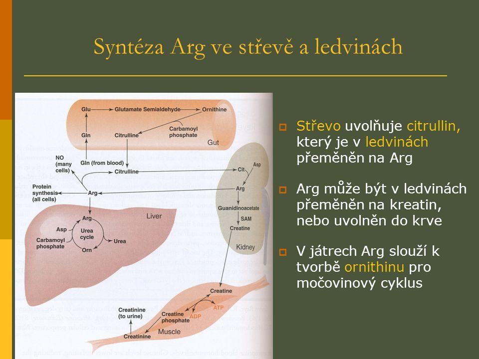 Syntéza Arg ve střevě a ledvinách  Střevo uvolňuje citrullin, který je v ledvinách přeměněn na Arg  Arg může být v ledvinách přeměněn na kreatin, nebo uvolněn do krve  V játrech Arg slouží k tvorbě ornithinu pro močovinový cyklus