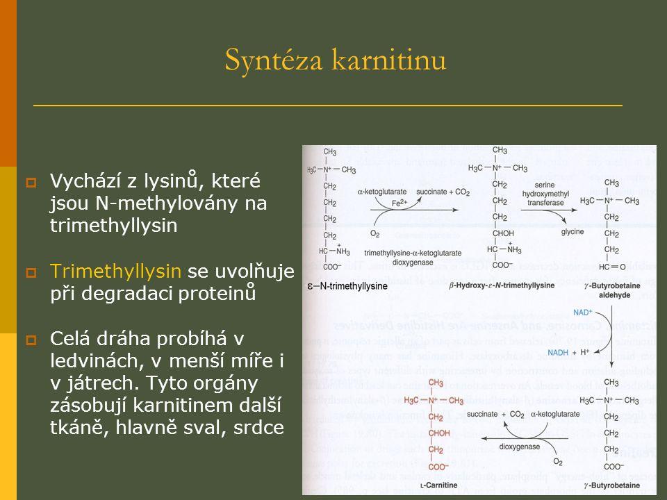 Syntéza karnitinu  Vychází z lysinů, které jsou N-methylovány na trimethyllysin  Trimethyllysin se uvolňuje při degradaci proteinů  Celá dráha probíhá v ledvinách, v menší míře i v játrech.