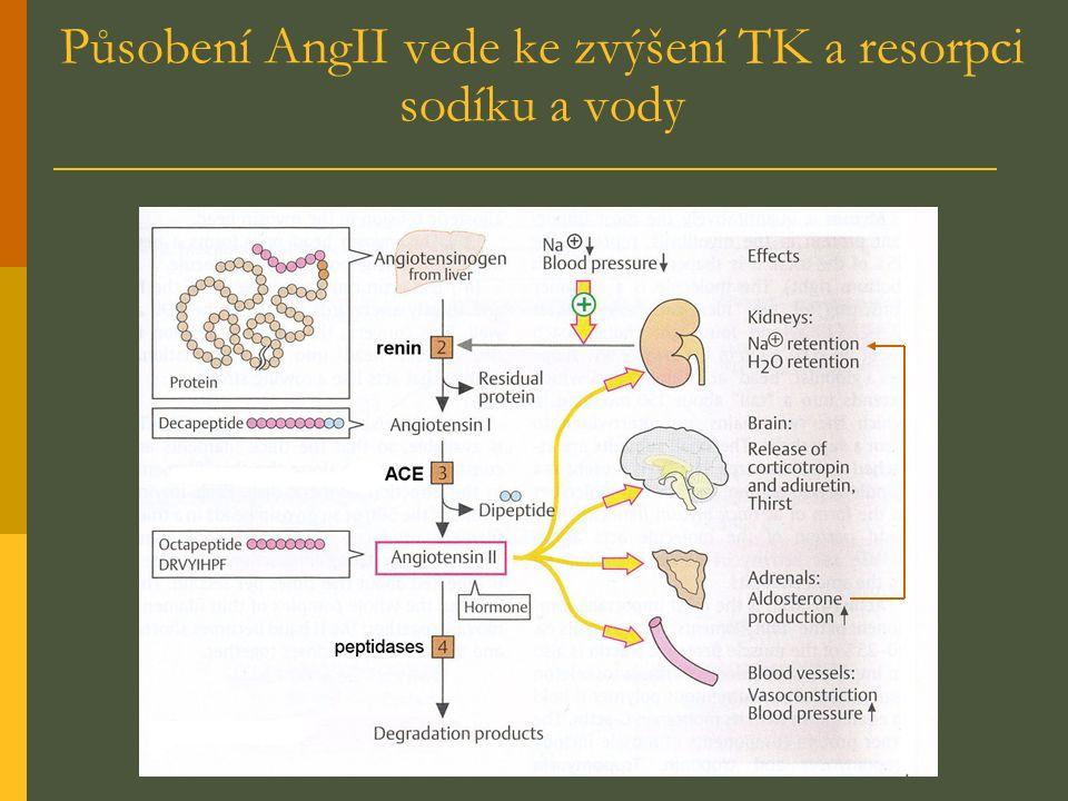 Působení AngII vede ke zvýšení TK a resorpci sodíku a vody