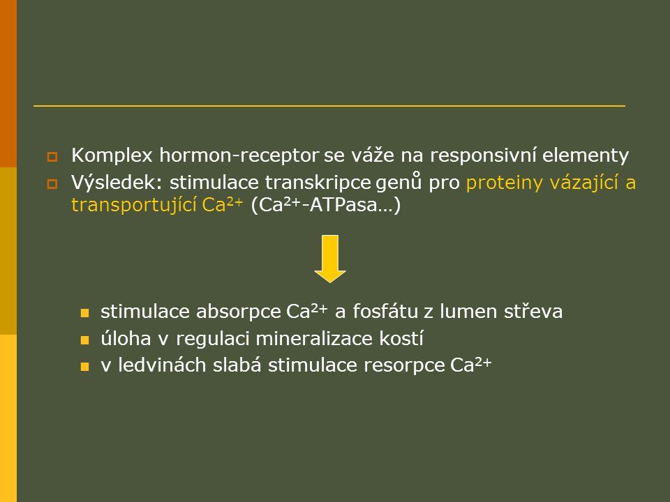  Komplex hormon-receptor se váže na responsivní elementy  Výsledek: stimulace transkripce genů pro proteiny vázající a transportující Ca 2+ (Ca 2+ -ATPasa…) stimulace absorpce Ca 2+ a fosfátu z lumen střeva úloha v regulaci mineralizace kostí v ledvinách slabá stimulace resorpce Ca 2+