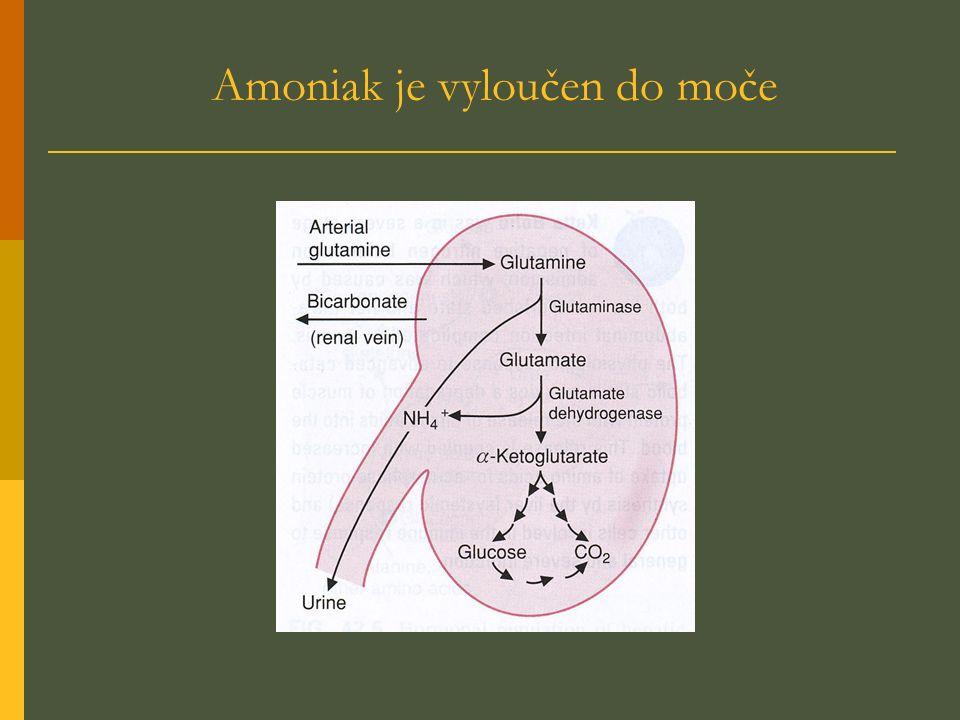 Amoniak je vyloučen do moče
