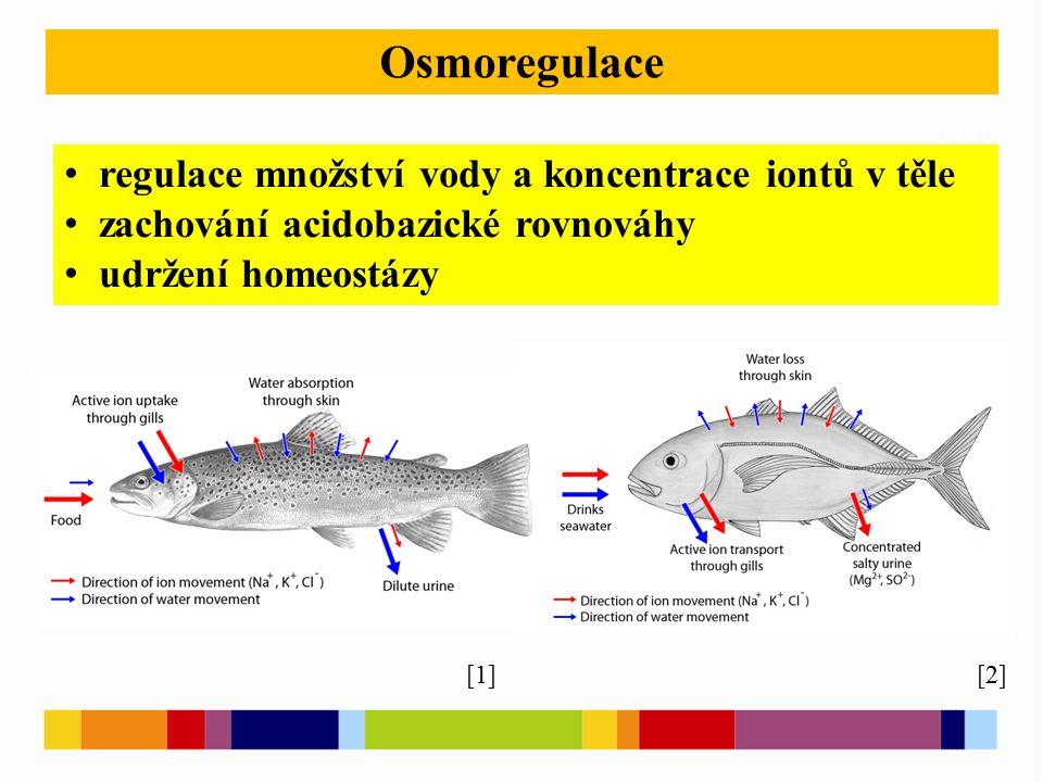 [12] Osmoregulace [2][1] regulace množství vody a koncentrace iontů v těle zachování acidobazické rovnováhy udržení homeostázy
