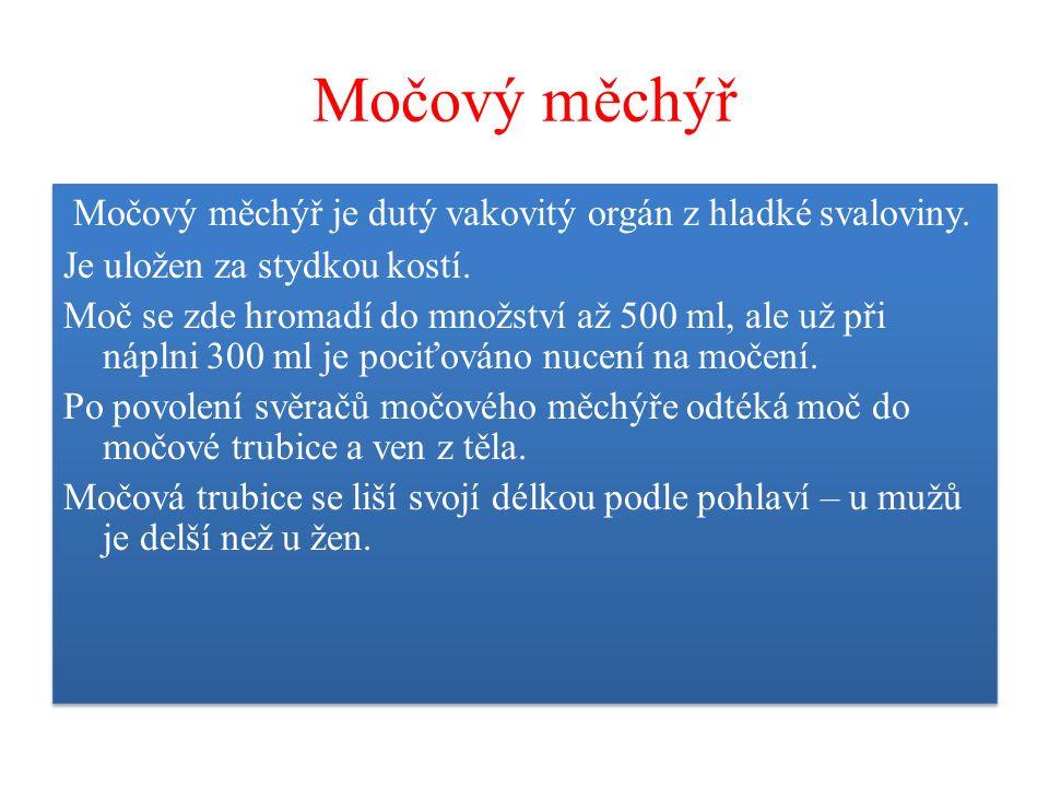 Močový měchýř Močový měchýř je dutý vakovitý orgán z hladké svaloviny.