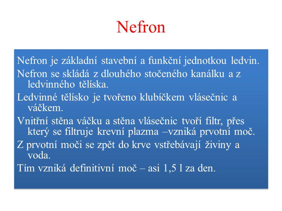 Nefron Nefron je základní stavební a funkční jednotkou ledvin. Nefron se skládá z dlouhého stočeného kanálku a z ledvinného tělíska. Ledvinné tělísko