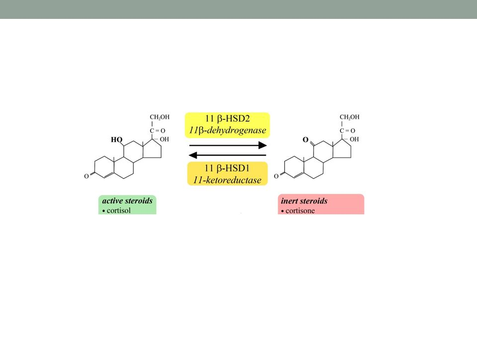 Mutace minaralokortikoidního receptoru vede k hypertenzi a toxemii v těhotenství.