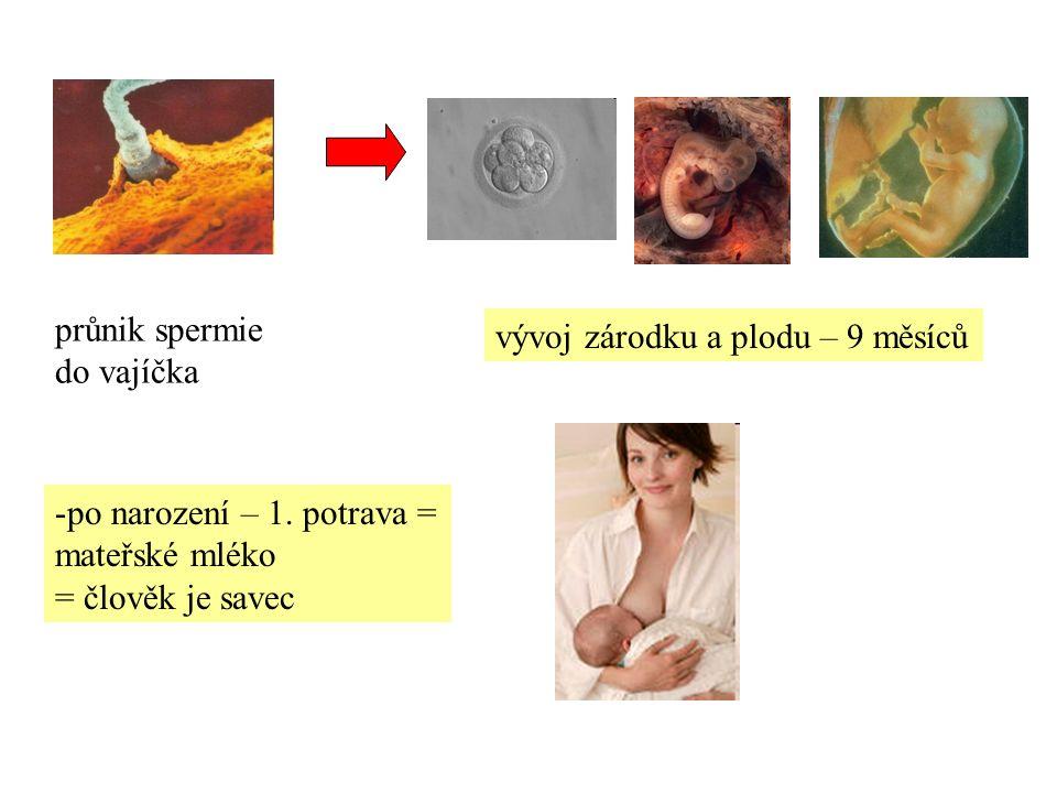 - v období dospívání (puberta) – tělesné i duševní změny proměna v ženu a muže dospělost stáří