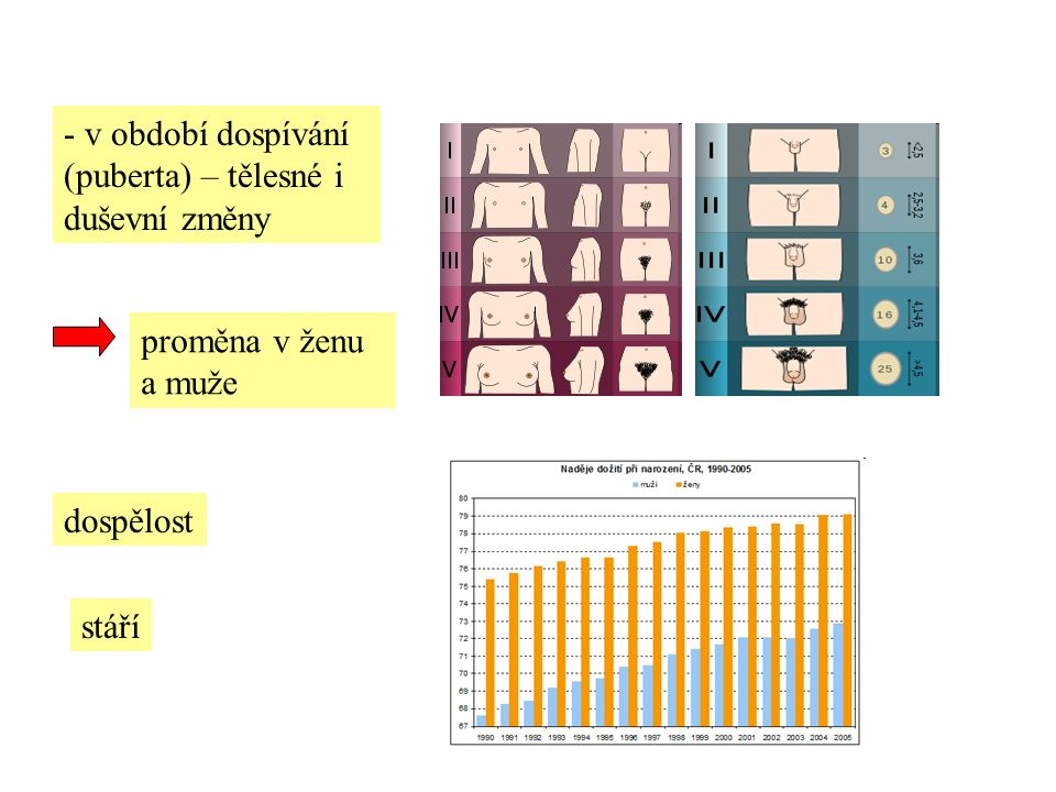 ŽENSKÉ POHLAVNÍ ÚSTROJÍ 2 vaječníky -v nich uložena vajíčka -přibližně od 11- 13 let každý měsíc dozrává 1 vajíčko -odchází vejcovodem do dělohy -není-li během několika hodin (dní) oplodněno spermií, zaniká -s mírným krvácením odchází z těla (menstruace)