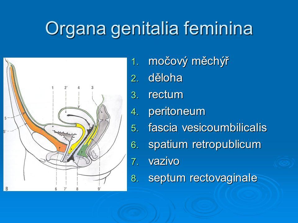 Organa genitalia feminina 1. močový měchýř 2. děloha 3. rectum 4. peritoneum 5. fascia vesicoumbilicalis 6. spatium retropublicum 7. vazivo 8. septum