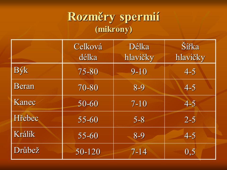 Rozměry spermií (mikrony) Celková délka Délka hlavičky Šířka hlavičky Býk 75-809-104-5 Beran 70-808-94-5 Kanec 50-607-104-5 Hřebec 55-605-82-5 Králík