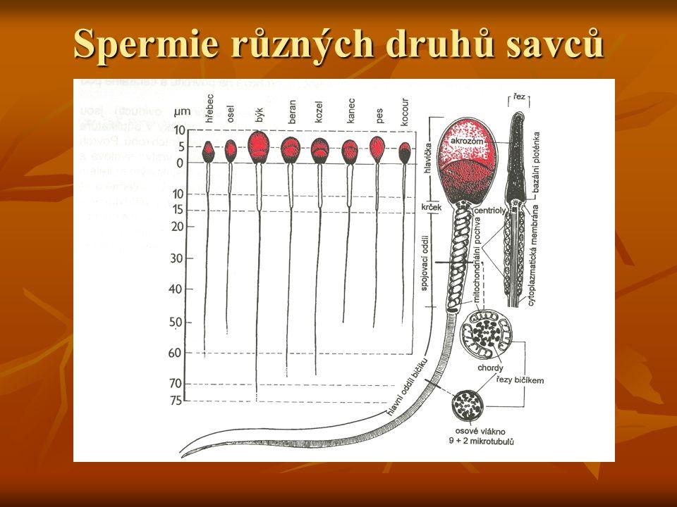 Spermie různých druhů savců