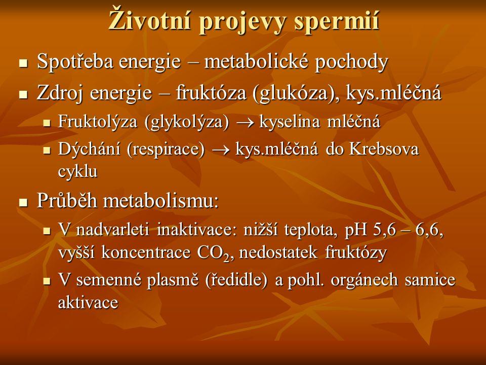 Životní projevy spermií Spotřeba energie – metabolické pochody Spotřeba energie – metabolické pochody Zdroj energie – fruktóza (glukóza), kys.mléčná Z