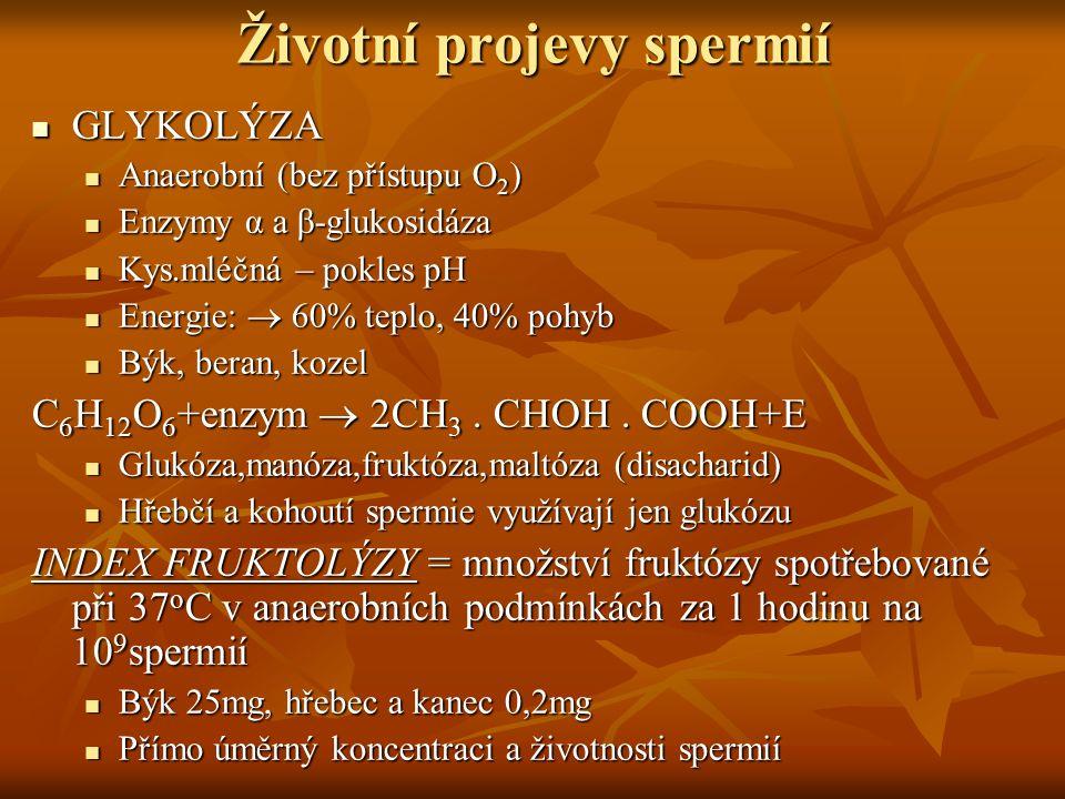 Životní projevy spermií GLYKOLÝZA GLYKOLÝZA Anaerobní (bez přístupu O 2 ) Anaerobní (bez přístupu O 2 ) Enzymy α a β-glukosidáza Enzymy α a β-glukosid
